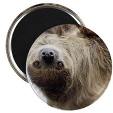 Sloth Curtains Magnet
