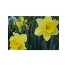 Yellow Daffodils Rectangle Magnet