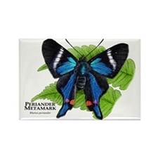 Periander Metalmark Butterfly Rectangle Magnet