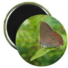 Butterfly and Ferns Magnet