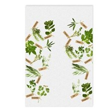 herbs Postcards (Package of 8)