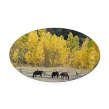 Grazing Horses Oval Car Magnet