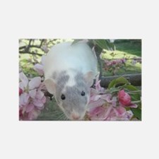 Pet Rat Rectangle Magnet