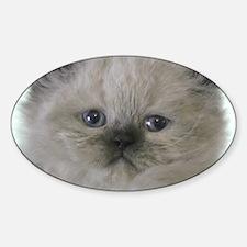 fabulous himalayan kitten Decal