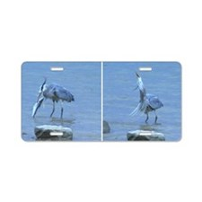 Great Blue Heron catching l Aluminum License Plate