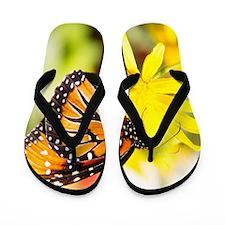 butterfly sc Flip Flops