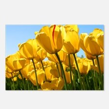 Field of tulips Postcards (Package of 8)