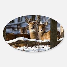 Bedded Deer D1316-061 Decal