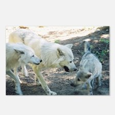 """A Wolf Family"" Postcards (Package of 8)"