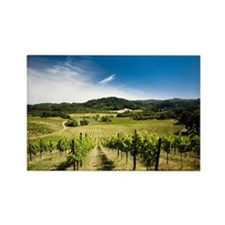 Vineyard in Sonoma Valley, Califo Rectangle Magnet