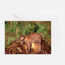 Bobcat Kitten Greeting Cards (Pk of 10)