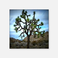 "Joshua Tree Square Sticker 3"" x 3"""