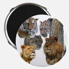 The Big Cats Magnet
