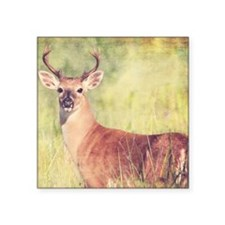 "White Tailed Buck Square Sticker 3"" x 3"""