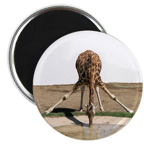 Helaine's Drinking Giraffe Magnet
