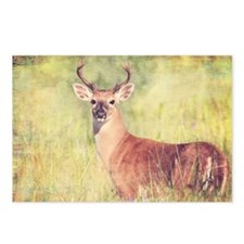 White Tailed Deer Postcards (Package of 8)