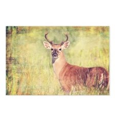 White Tailed Buck Postcards (Package of 8)