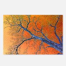 Bare Oak Postcards (Package of 8)