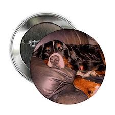 """Sleeping Bernese 2.25"""" Button"""
