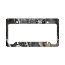 Snowy Lone Wolf License Plate Holder