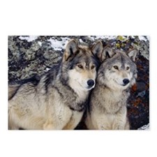 Wolf Couple Postcards (Package of 8)