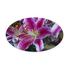 Stargazer Lily Oval Car Magnet