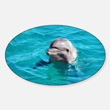 Dolphin Blue Water Decal