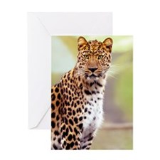 Leopard Photograph Greeting Card