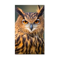 Eagle Owl Rectangle Car Magnet