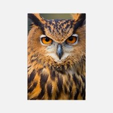 Eagle Owl Rectangle Magnet