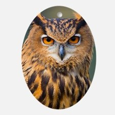 Eagle Owl Oval Ornament