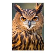 Eagle Owl Postcards (Package of 8)