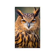 Eagle Owl 3'x5' Area Rug