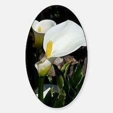 White Lily Sticker (Oval)