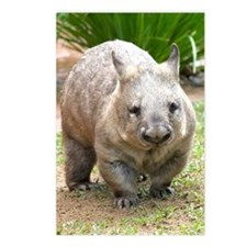 Common wombat - vombatus  Postcards (Package of 8)