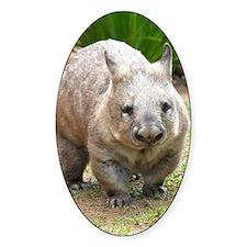 Common wombat - vombatus ursinus Decal