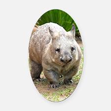 Common wombat - vombatus ursinus Oval Car Magnet