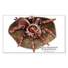 King Baboon Tarantula Decal