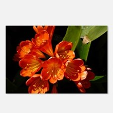 Kaffir Lily Postcards (Package of 8)