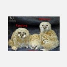 2013 Owlets First Banding Rectangle Magnet