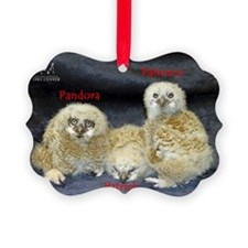 2013 Owlets First Banding Ornament
