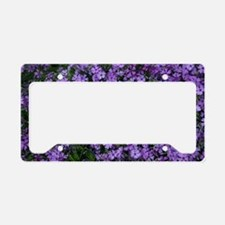Spring Butterfly Visitor License Plate Holder