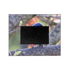 Indigo Bunting Picture Frame