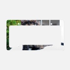 callie the cat License Plate Holder