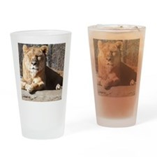 lioness Drinking Glass