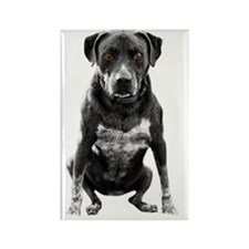 Pitbull Sitting with amber eyes Rectangle Magnet