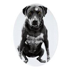 Pitbull Sitting with amber eyes Oval Ornament