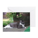 Cat photography Greeting Cards
