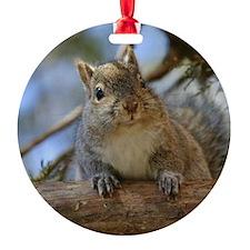 Cute Squirrel Ornament