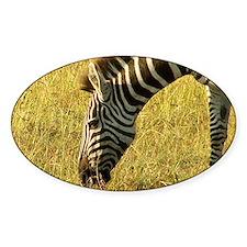Zebra Grazing in Mara Decal